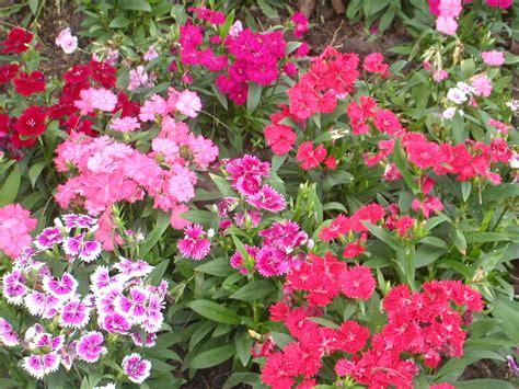 wonderful tips  designing   flower garden