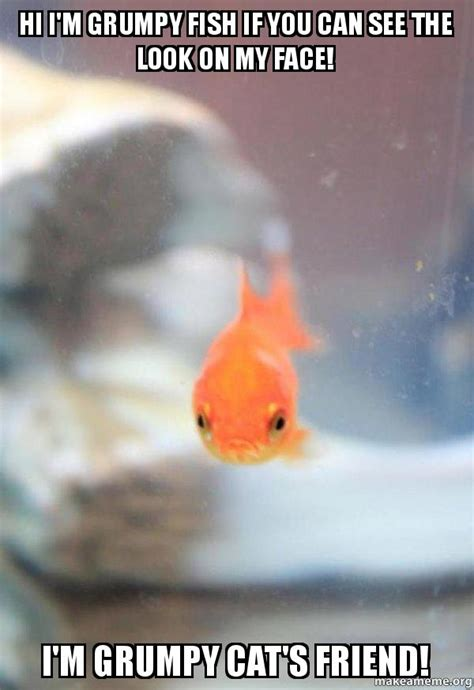 Fish Memes - hi i m grumpy fish if you can see the look on my face i m
