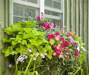 Pot Pour Balcon : planter en pot gamm vert ~ Teatrodelosmanantiales.com Idées de Décoration