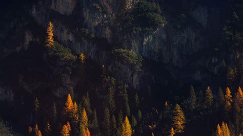 nz wood tree fall mountain nature wallpaper