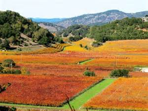 Napa Valley Fall