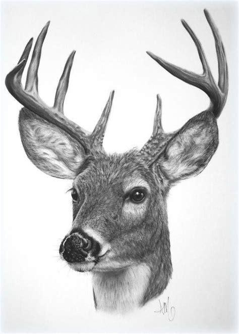 deer drawing deer drawing deer drawing deer art deer