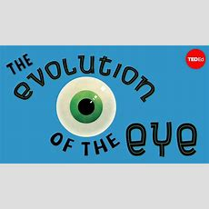 The Evolution Of The Human Eye  Joshua Harvey  Youtube