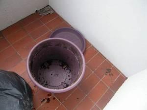 Composteur De Balcon : je fais mon compost de balcon garanti sans vers ~ Melissatoandfro.com Idées de Décoration