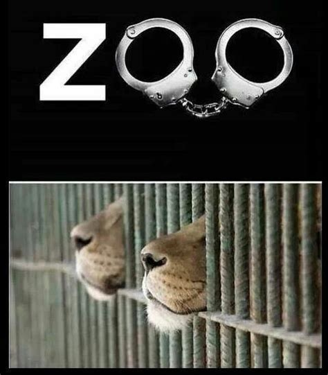 zoo animals animal cruelty sad zoos quotes circus meme captivity abused cages testing abuse handcuffs locked stop wild vegan nature