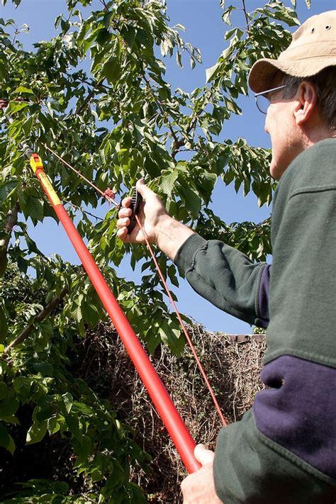 bäume schneiden im sommer kirschb 228 ume im sommer schneiden ndr de ratgeber garten nutzpflanzen