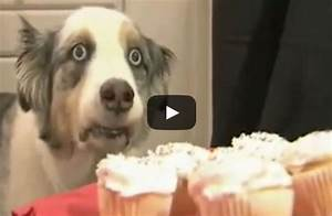 Dramatic Cupcake Dog (If Only We All Had This Willpower ...
