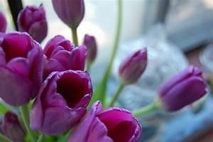 Free Flowers – Ok Goods