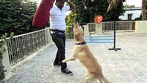 Dog Training, Maharashtra, INDIA - YouTube