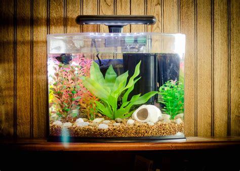 aquarium fish aquarium design ideas