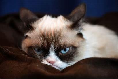 Cat Grumpy Wallpapers Desktop