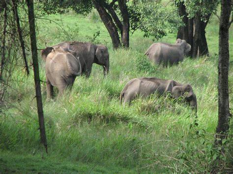 Nilgiri Biosphere Reserve Kerala