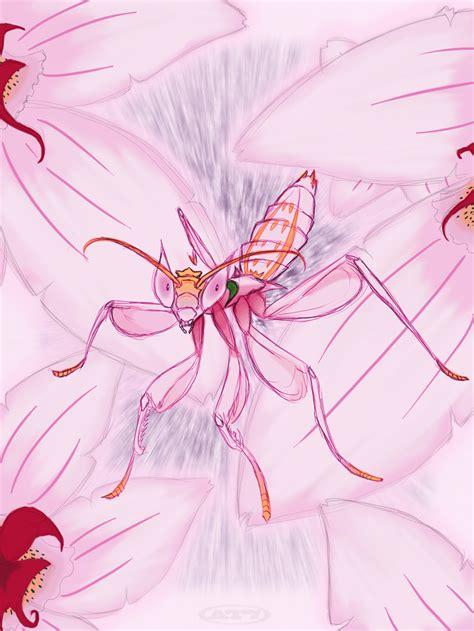 orchid mantis  aftertaster  deviantart