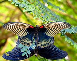 Butterflys, Wallpaper, And, Background, Image