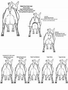 81 Best Goats Images On Pinterest