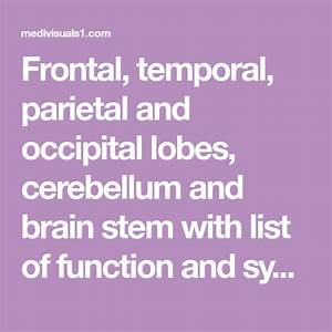 Frontal  Temporal  Parietal And Occipital Lobes
