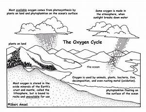 Oxygen Cycle Description And Assessment