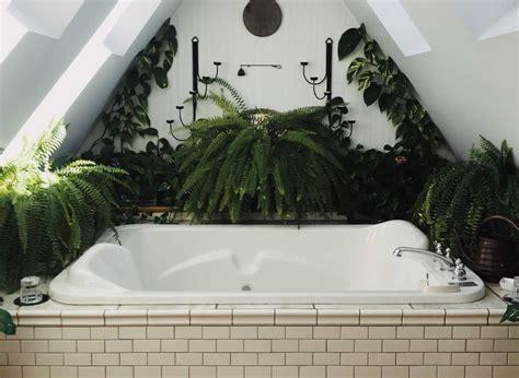 Pflanzen Im Badezimmer by Pflanzen Im Badezimmer Impex