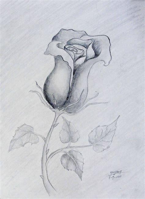 gallery sketsa bunga mawar