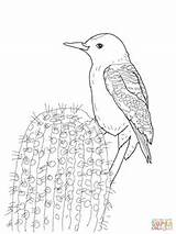 Woodpecker Coloring Gila Pages Woodpeckers Monster Printable Supercoloring Sketch Template Credit Larger Lizard sketch template