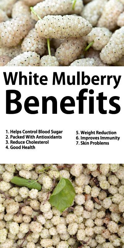 white mulberry benefits  helps control blood sugar