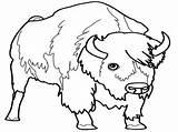 Bison sketch template