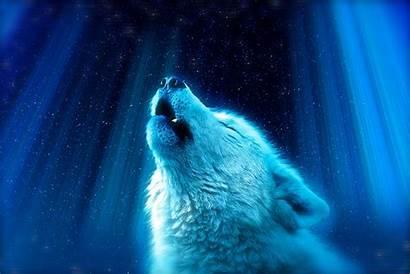 Polar Bear Water Space Wallpapers Wolf Akspic