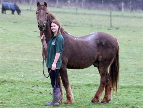 horse oldest horses pretty essex shayne sanctuary draught irish stable stallions horseback wild years human ride animal