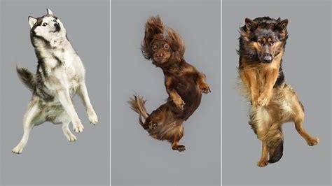 dogs  flight  hilarious