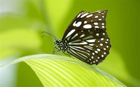 Butterfly Hd Wallpapers 1080p
