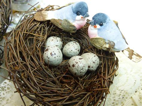 Parakeet Eggs – From Fertilization to Hatching Guide 2019