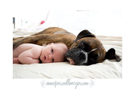 17 Best Images About Boxer And Kids On Pinterest