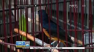 MURAI BATU DIGDAYA: TALK SHOW : INDONESIA MORNING SHOW DI ...