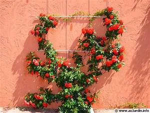 Plantes Grimpantes Mur : des supports pour plantes grimpantes ~ Melissatoandfro.com Idées de Décoration