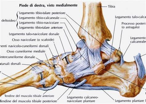 dolore al piede parte interna patologia traumatica della caviglia distorsioni e
