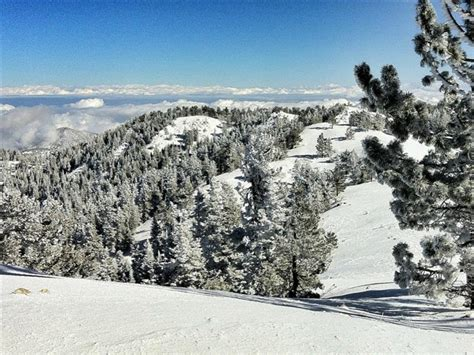 mount pinos skiing rootsrated
