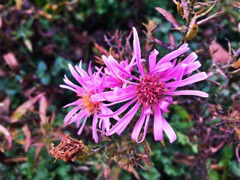 Gambar : alam mekar menanam ungu herba botani Flora