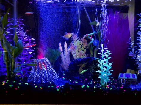 glofish aquarium look at the volcano finding nemo haha bachelorette pad p