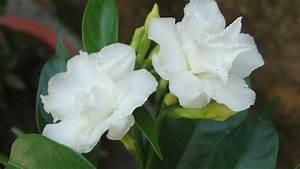 The gallery for --> Names Of White Flowers