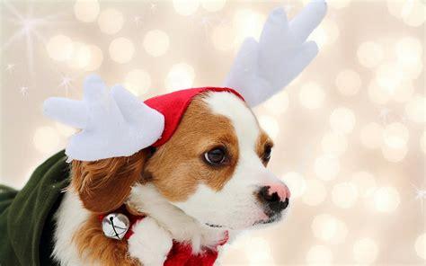 christmas dog wallpaper wallpapertag