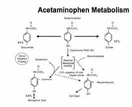 Image result for acetaminophen metabolism