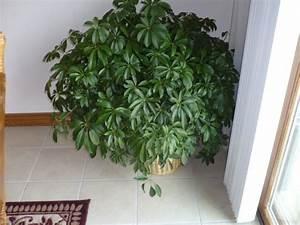 Grande Plante D Intérieur Facile D Entretien : plante d interieur facile entretien terrarium plante verte ~ Premium-room.com Idées de Décoration
