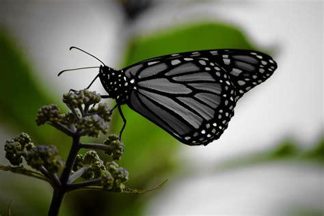 stock photo  animal bokeh butterfly