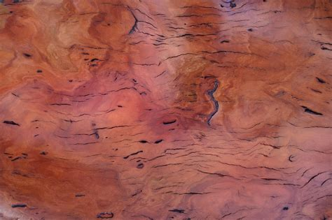 Free Timber Burl Jarrah Stock Photo   FreeImages.com
