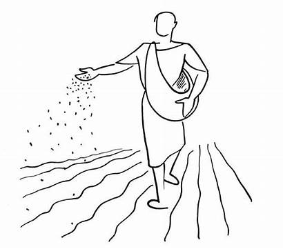 Sowing Seed Bible Clipart Drawing Seeds Stories