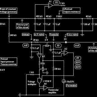 Pdf Cardiovascular Physiology Simulation Steady