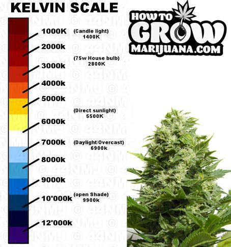growing weed with fluorescent lights need help on which light to get beginner growing