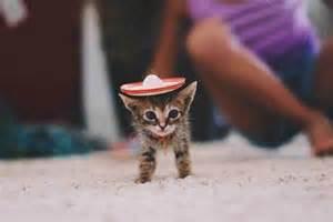 tiny cats a tiny kitten wearing a tiny sombrero