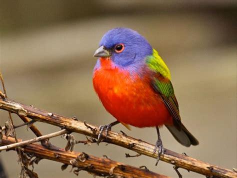outside my window 187 best birds