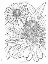 Zinnia Drawing Flower Flowers Coloring Getdrawings sketch template